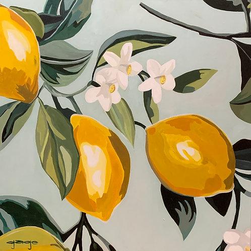 Lemon Aid+