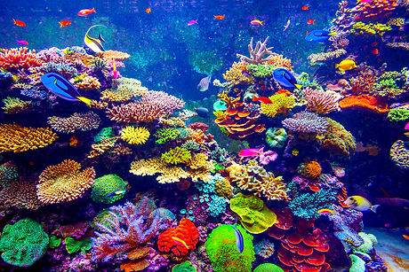 Coral Reef and Tropical Fish in Sunlight. Singapore aquarium.jpg