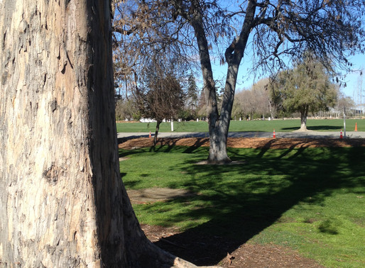 Cabling & Bracing Inspection of Trees in Timaru