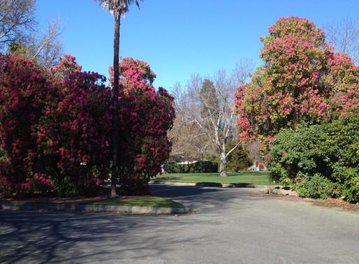 Arboricultural Survey for Timaru Botanical Gardens