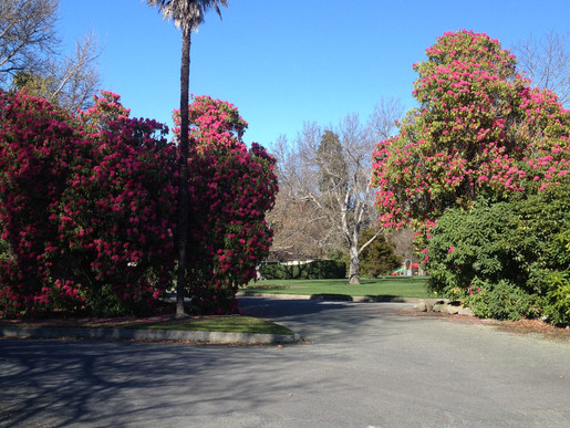 Arboricultural Survey for Timaru Botanical Gardens
