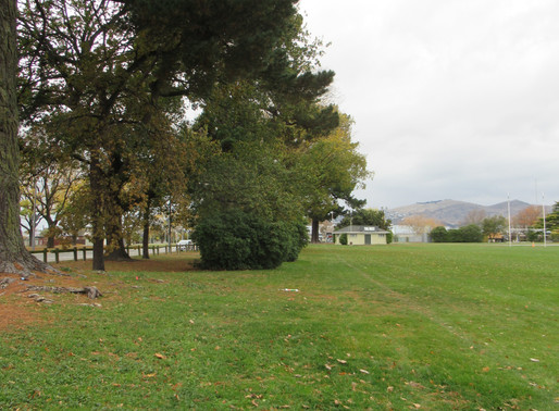 Arboricultural Tree Survey & Protection Methodologies (Linwood Park upgrades)