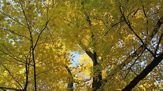 Autumn photos 1.jpeg