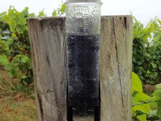 Raindrops on grapevines。大雨です…