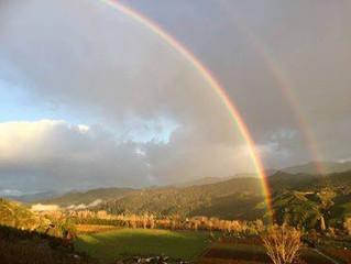 ビニヤードからカフランギ山脈を望む雨の合間の風景です。