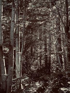 Forest of Erosia