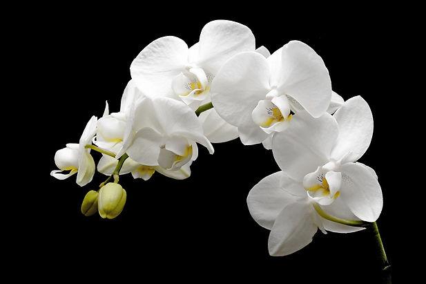 orchid-2124803_1920.jpg