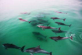 Big-Dolphin-Pods-Adelaide.jpg
