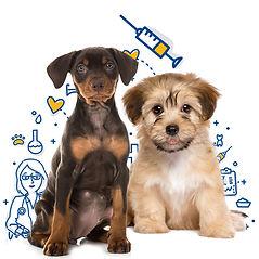 MPC_Dog_Vaccine_Main.jpg