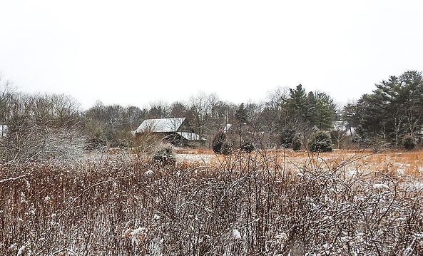 Barn Meadow Snow.jpg