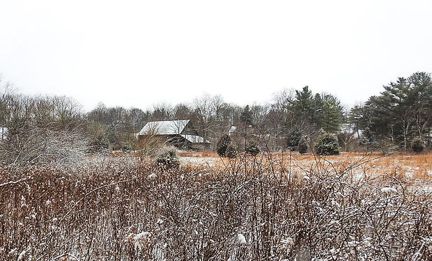 Barn Meadow Snow.jpg