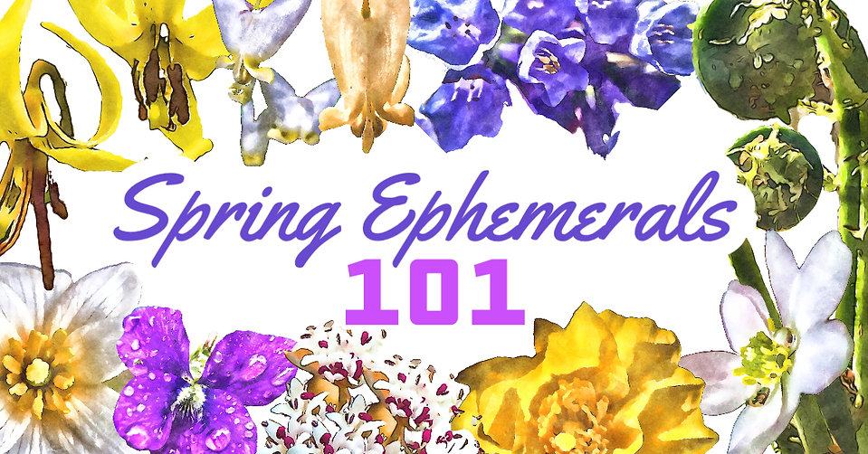 Spring Ephemeral 101.jpg