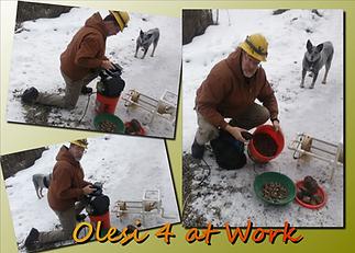 Olesi4 Crusher Collage (2).tif