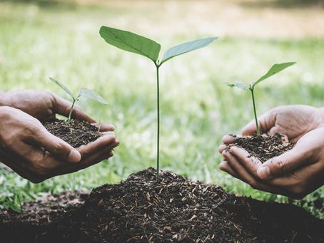 Sustentabilidade no mercado de alimentos: mais que uma tendência!