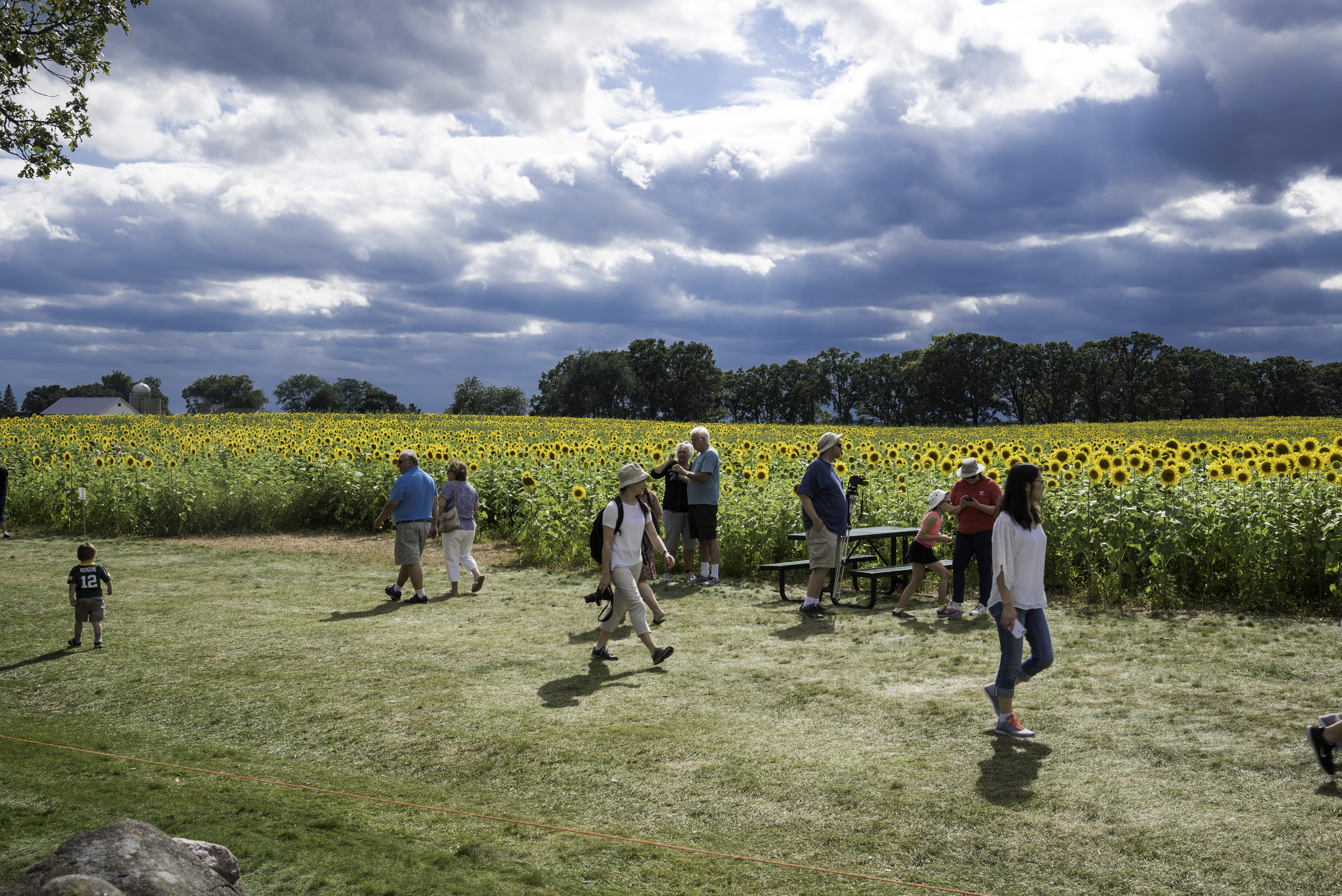 visitors-to-pope-sunflower-farm-in-middleton-wisconsin