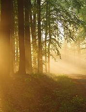 Stammbaum Bild1.jpg