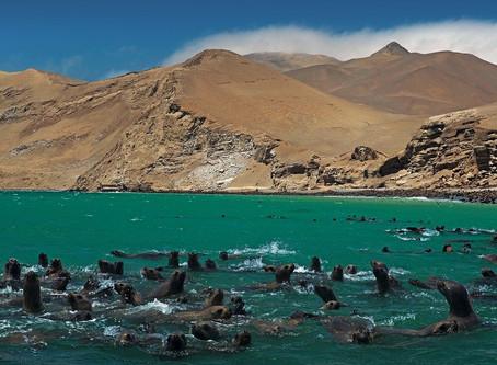Perú rechaza estudio ambiental para exportar minerales desde puerto cerca a reserva natural