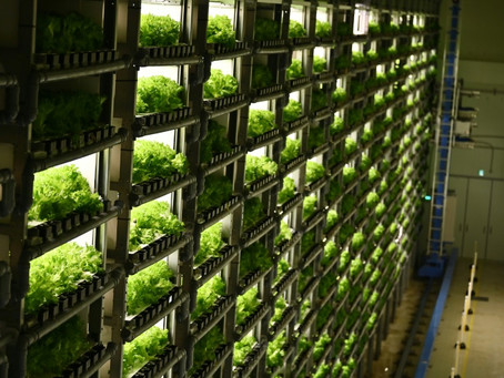 Fábricas de verduras' en las ciudades de Japón para reemplazar al campo
