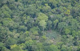 Defensores de indígenas no contactados ganan batalla en Perú frente a actividades petroleras