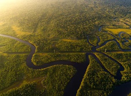 ¿Sabes cuáles son las principales amenazas para el Amazonas?