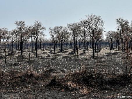 Bolivia decreta desastre nacional por incendios y sequías