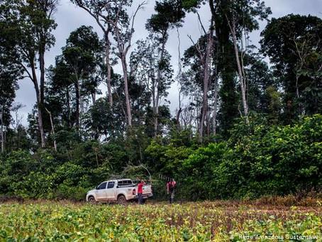 Piden prohibir deforestación en la Amazonía brasileña durante cinco añosLos incendios en las selvas