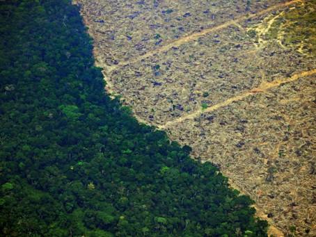 Deforestación amazónica de Brasil bate récord desde 2008
