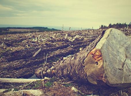 ¿Por qué las grandes empresas no informan sobre los riesgos de la deforestación?