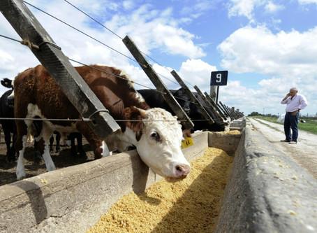 Con medio mundo confinado, el duro camino para exportar alimentos desde Argentina