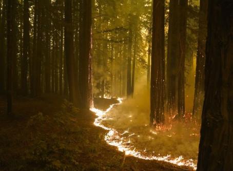 Los incendios forestales de California son algunos de los más grandes en la historia del estado