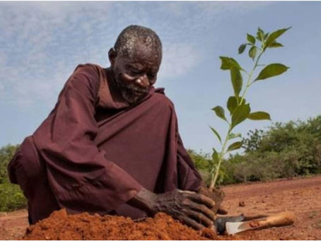 El agricultor que detuvo el desierto y lo transformó en un bosque frondoso