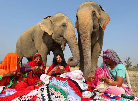 Tejen pijamas gigantes para proteger del frío a elefantes rescatados
