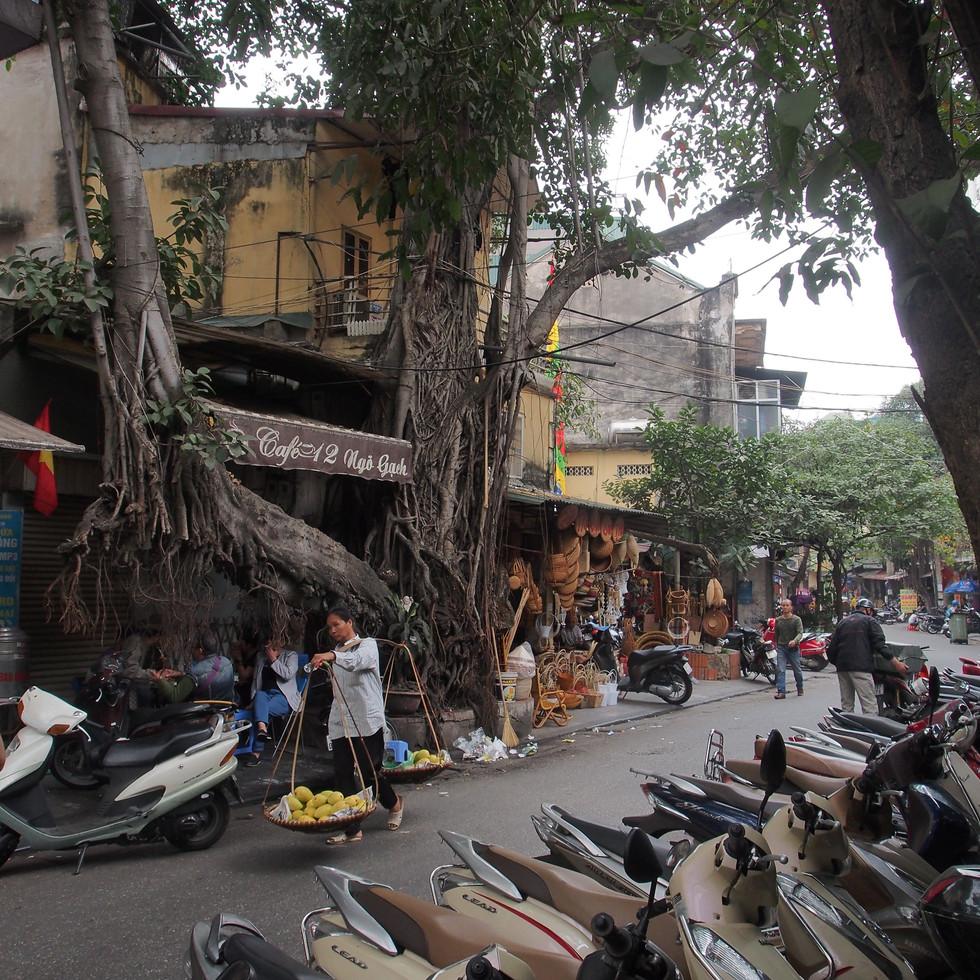 présence végétale dans les rue du vieux Hanoï