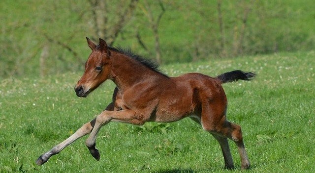 thumbnail_IMG_0329-2018-filly.jpg