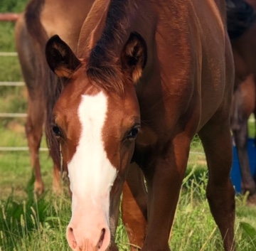thumbnail_IMG_0372-2019-filly.png
