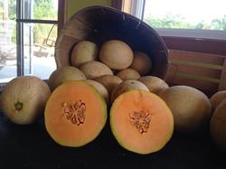 Cantaloups