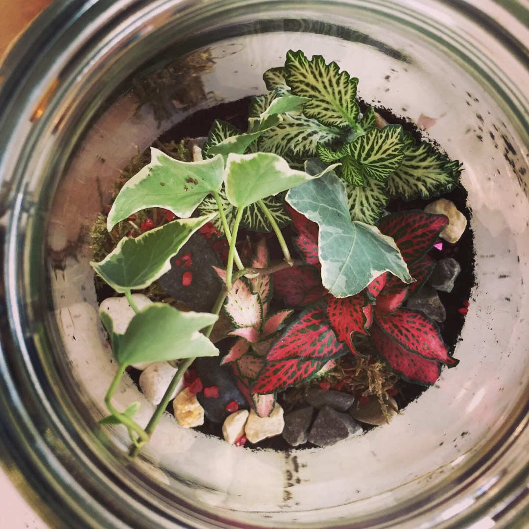 Kilner-Jar-Terrarium