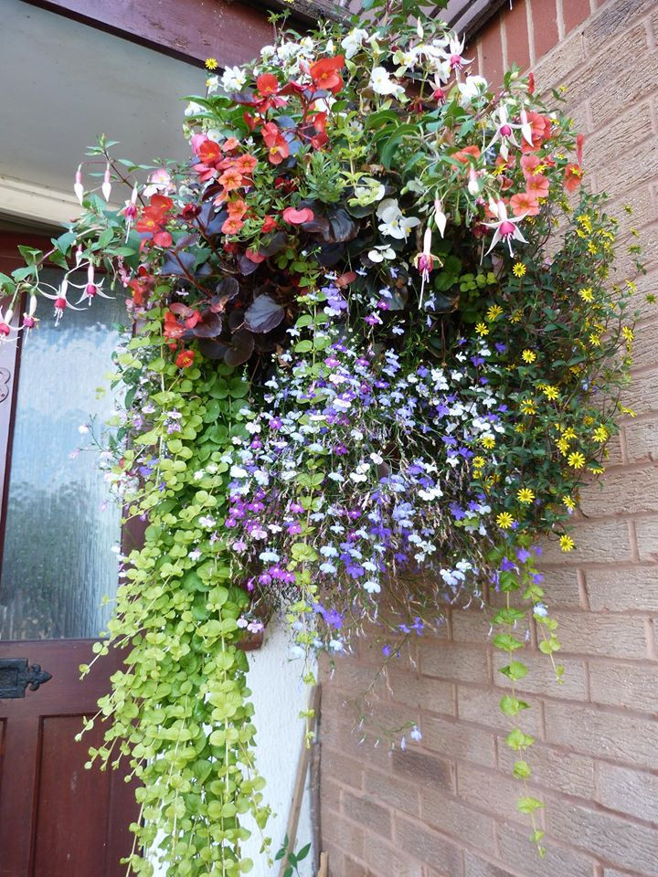 Hanging Basket Classes