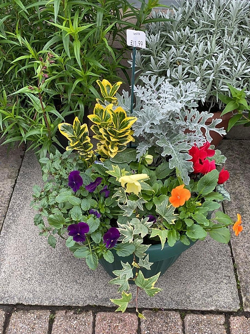 Seasonal Tubs and Containers