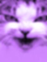spoetry_icon.jpg