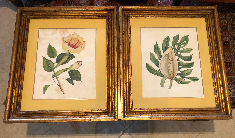 Botanicals giclees