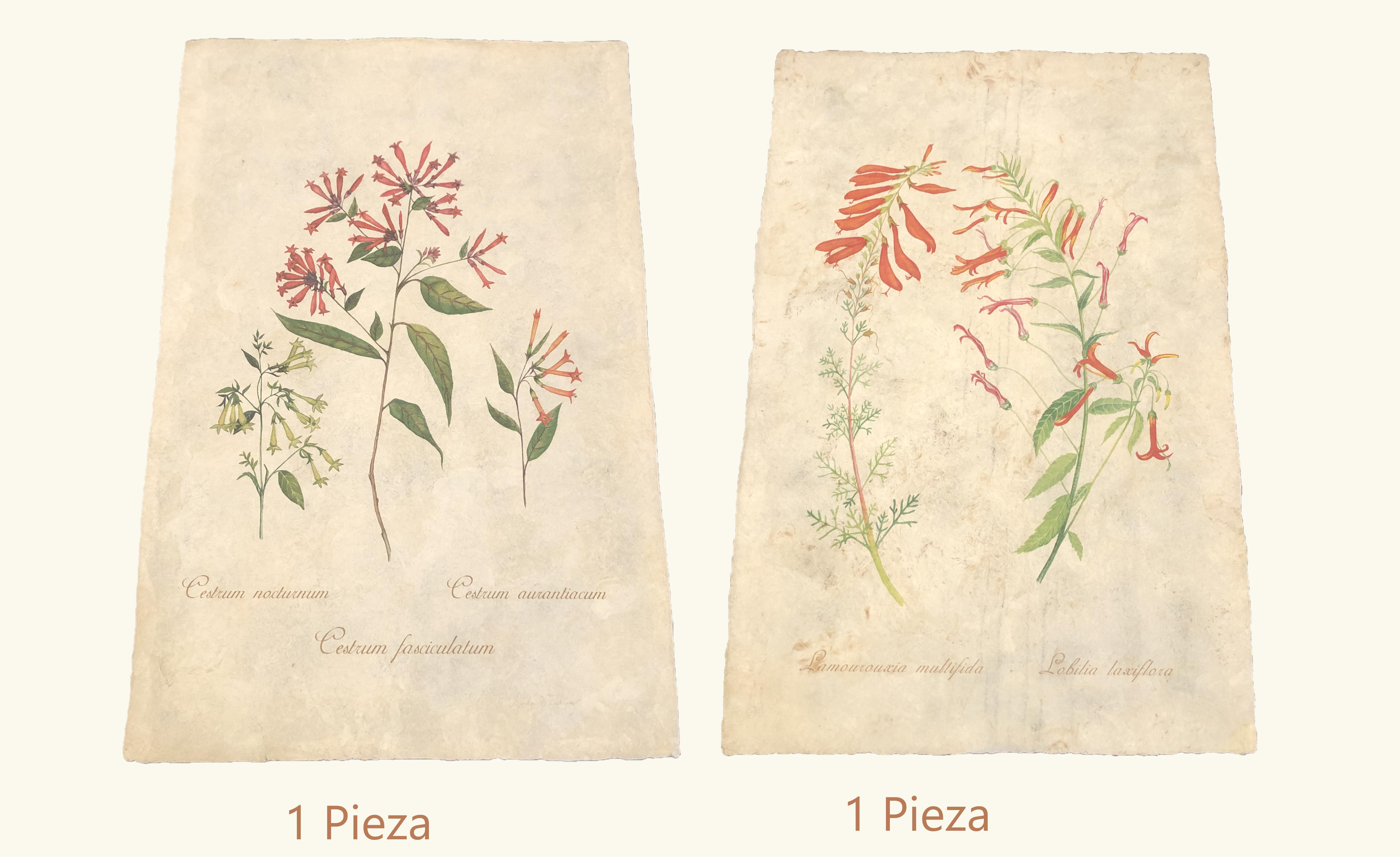 Botanicals Prints