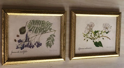 Antique Botanicals E