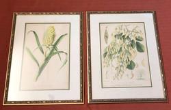 Antique Botanicals A