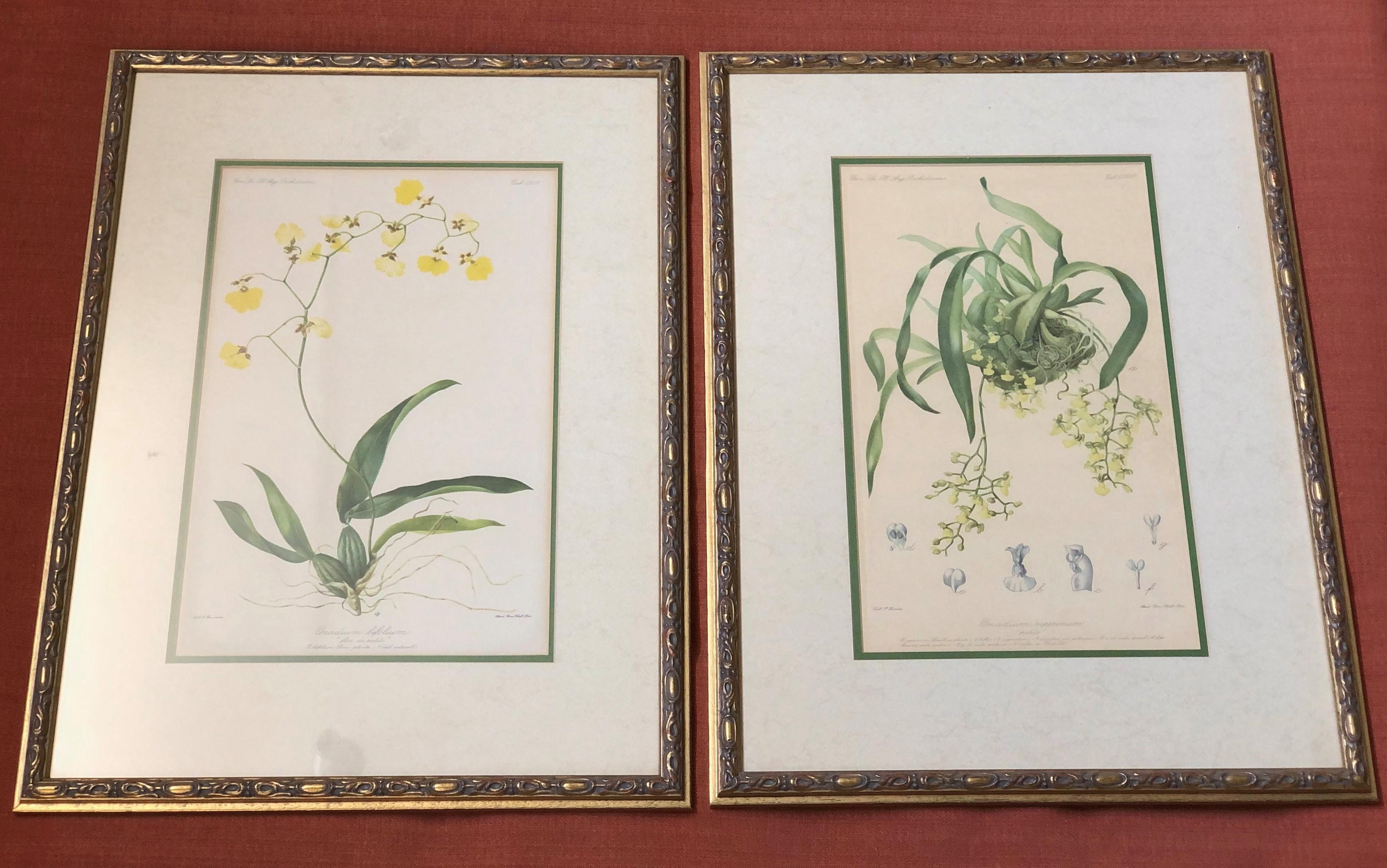 Antique Botanicals B