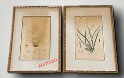 Antique Botanicals C