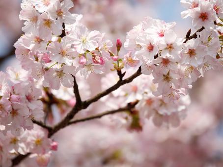 Herzlich Willkommen Frühling!