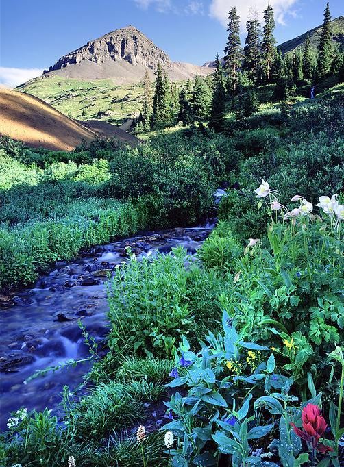 A rocky peak with a forested stream and wildflowers below