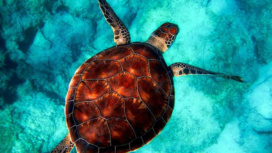 Following a turtle in the Andaman waters