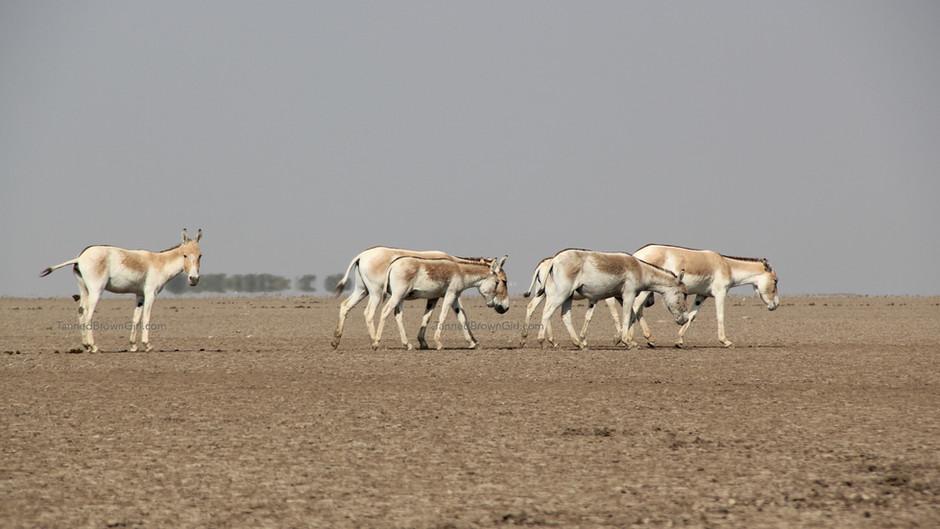A WILD LIFE SAFARI ON FOOT